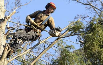 hiring experienced Denver tree surgeons