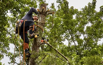 tree surgeon Denver, Norfolk