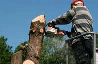 Denver felling services